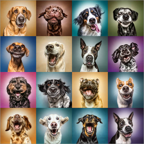 Wall sticker Funny dog faces