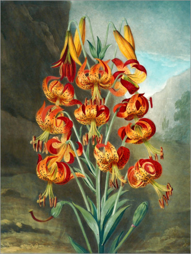 Premium poster Tiger Lilies