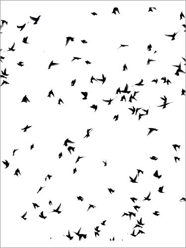 Premium poster A wild flock of birds