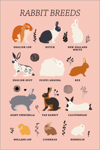 Premium poster Rabbit breeds