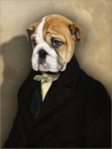 Premium poster Frenchie with coat