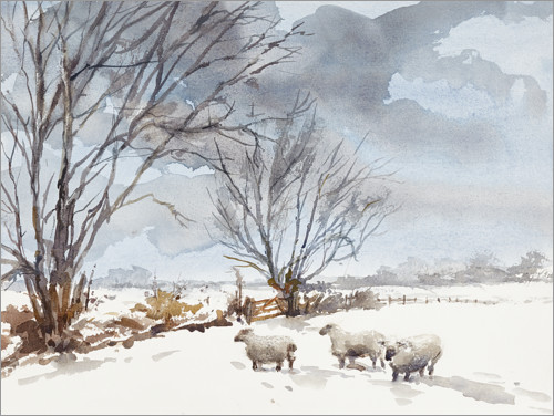 Premium poster Sheep in the Snow
