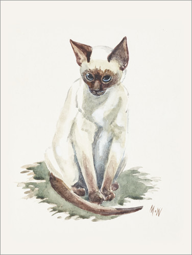 Premium poster Little siamese cat, watercolor