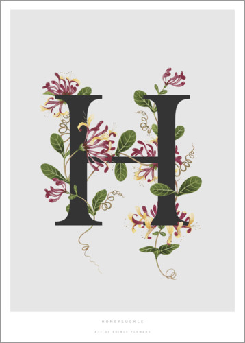 Premium poster H is for Honeysuckle