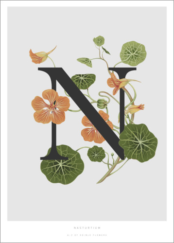Premium poster N is for Nasturtium