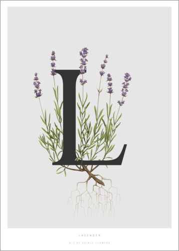 Premium poster L is for Lavender