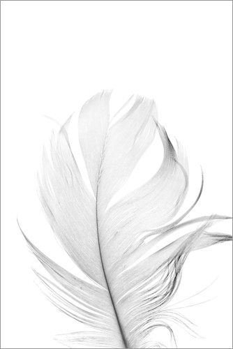 Premium poster White Feather