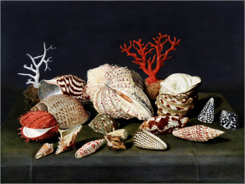 Premium poster Still life with shells and corals