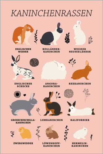 Premium poster Rabbit Breeds (German)