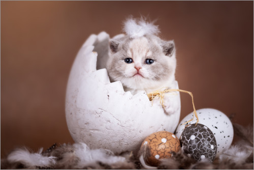 Premium poster Kitten, peeled out of the egg