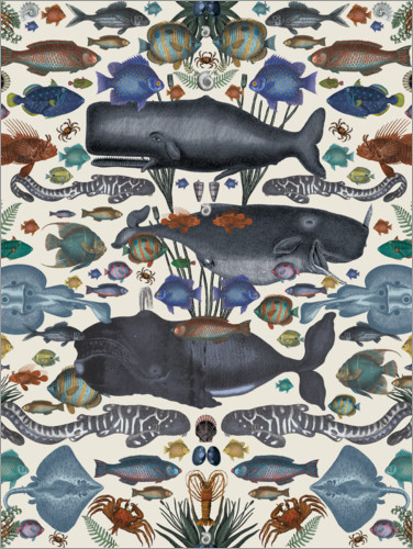 Premium poster Whales and other marine animals