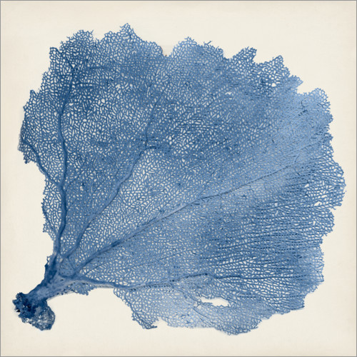 Premium poster Sea fan blue
