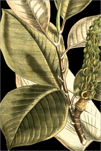 Premium poster Tranquil Tropical Leaves II