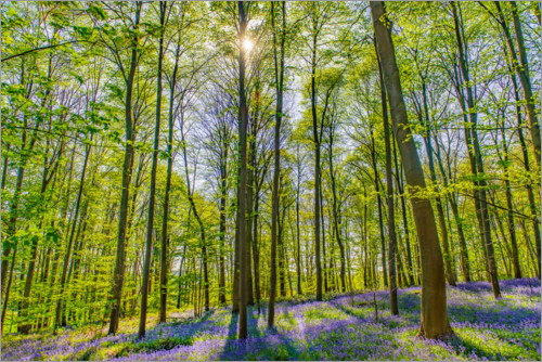 Premium poster Blue Flowers Forest II