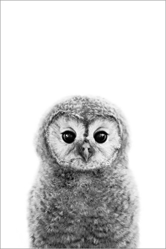 Premium poster Young owl