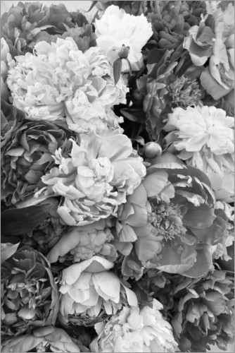 Premium poster Peonies black and white