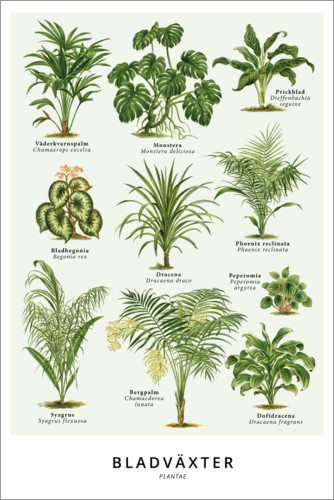 Foliage Plants Swedish Posters And Prints Posterlounge Com
