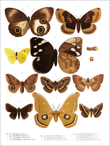 Premium poster Colourfulness of insects V