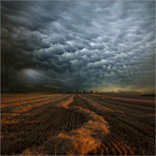 Premium poster Cloudburst over a field
