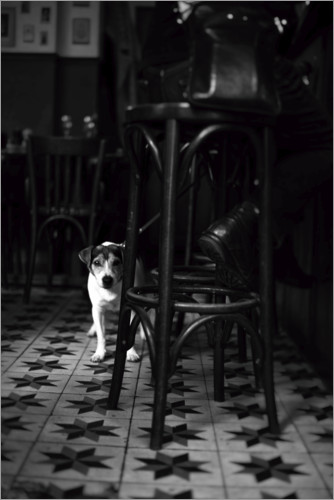 Premium poster French bistro with a small dog