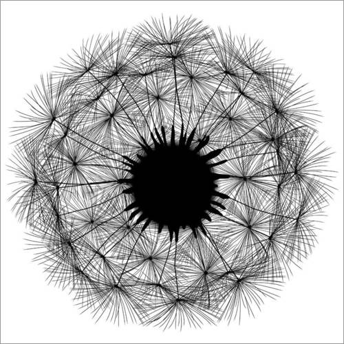 Wall sticker Dandelion - black