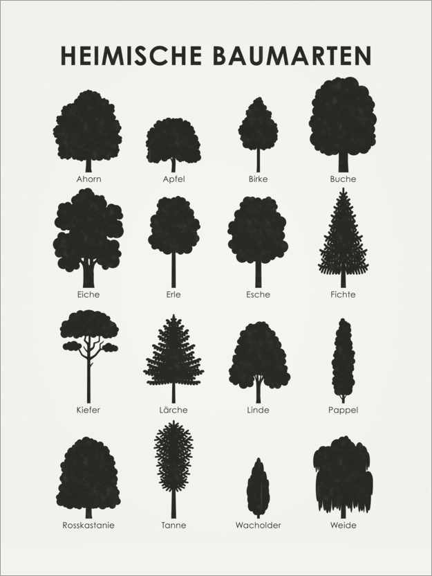 Premium poster Native tree species (German)