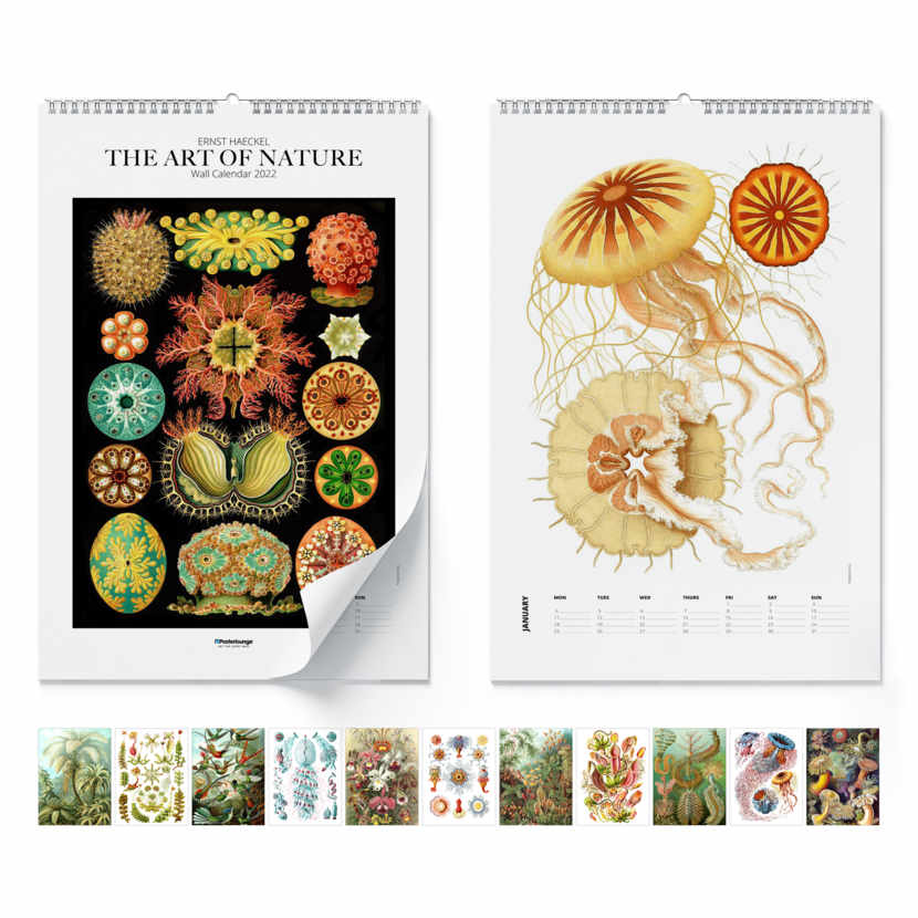 Wall calendar Ernst Haeckel, The Art Of Nature 2021