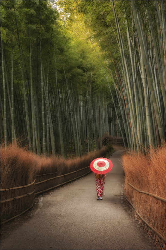 Premium poster In the morning in the bamboo forest