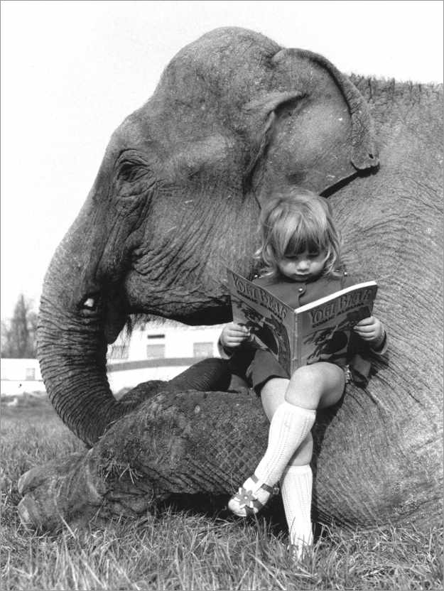Premium poster Girl Sits on Elephant and Reads