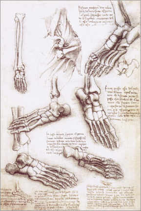 Premium poster Foot anatomy