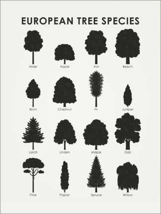 Premium poster European tree species