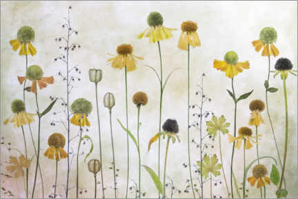 Wood print  Helenium - Mandy Disher