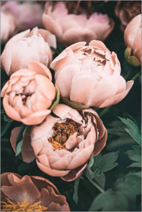 Wood print  Peonies in Pink - Sisi And Seb
