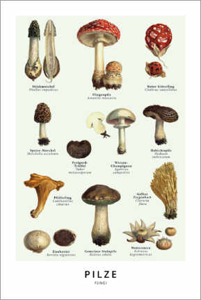 Premium poster Mushrooms (german)