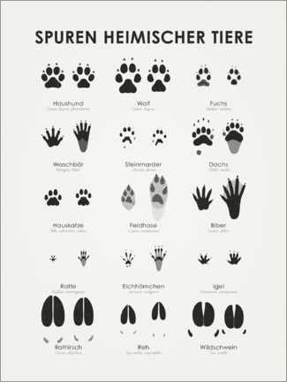 Premium poster  Tracks of Native Animals (German) - Iris Luckhaus