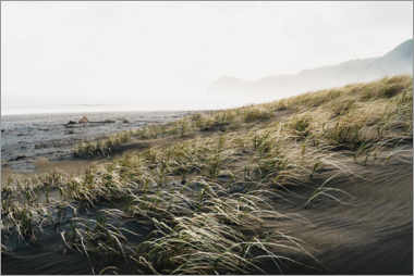 Gallery print  Black sand beach in New Zealand - Igor Kondler