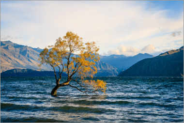 Wood print  Lonely tree in New Zealand in autumn - Igor Kondler