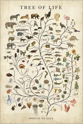 Wall sticker  Tree of Life - Studio W