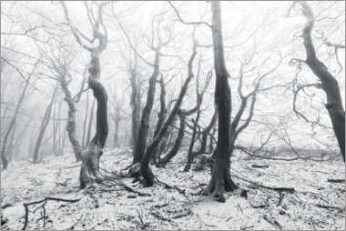 Aluminium print  Mystical forest in the snow and fog - Sven Müller
