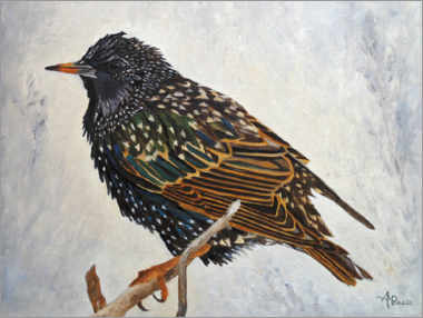 Acrylic print  Starling in the winter - Ángeles M. Pomata