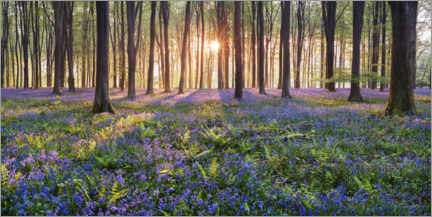 Premium poster Sea of flowers in the fairytale forest