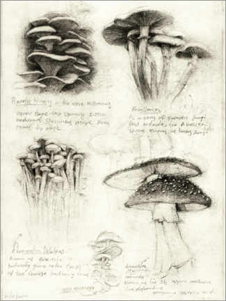 Premium poster Mushrooms