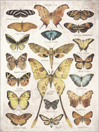Premium poster  Butterflies and Moths - Mike Koubou