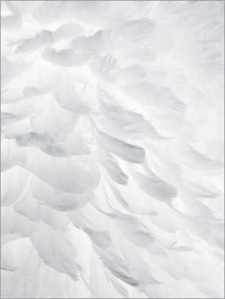 Premium poster  Feathers I - Magda Izzard
