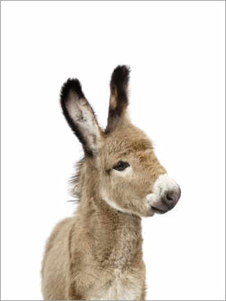 Foam board print  Baby donkey - Sisi And Seb