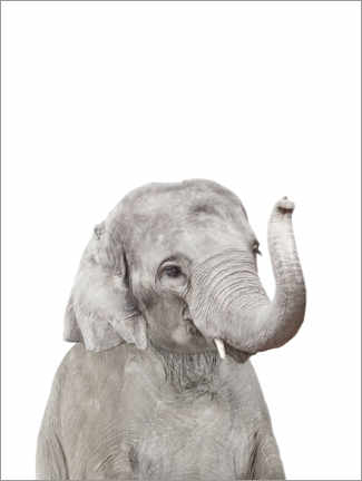 Canvas print  Baby Elephant - Sisi And Seb