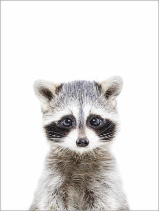 Aluminium print  Baby Raccoon - Sisi And Seb