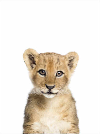 Canvas print  Baby Lion - Sisi And Seb