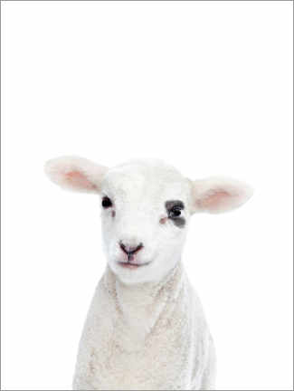 Canvas print  Baby lamb - Sisi And Seb