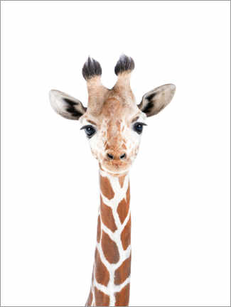Canvas print  Baby Giraffe - Sisi And Seb